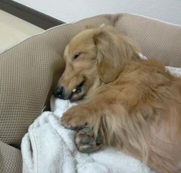 咲ベッド2