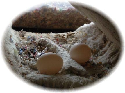 みかんの卵