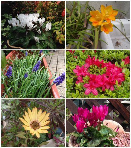 庭に咲く花