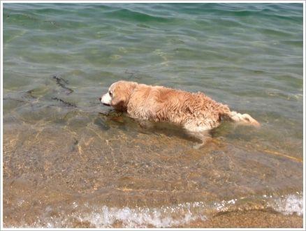 お目目の見えないカール君、大胆に海の中へ