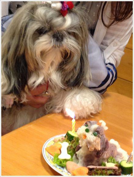 モモちゃん、4歳のお誕生日おめでとう☆
