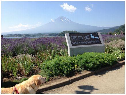 富士山が見えたよ♪