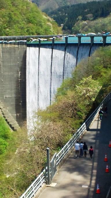 鳴子ダムの鯉のぼり2