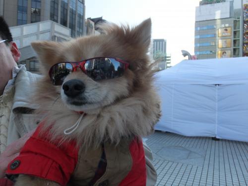 カッコいい犬DSCF6778_convert_20140507132053