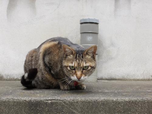 路地の猫S0508662_convert_20140507051426