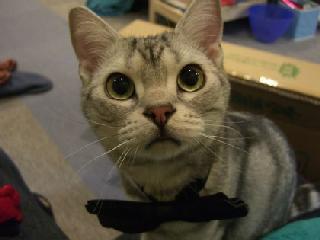 cat1[1]