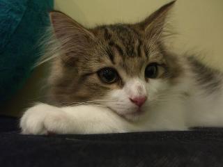 cat8[1]