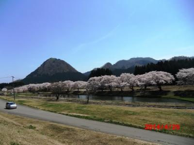 中川原桜1