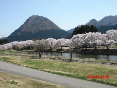 中川原桜2