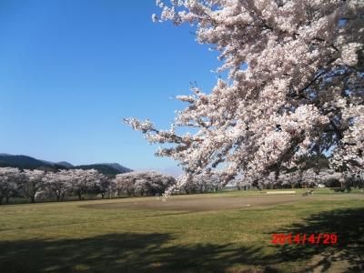 中川原桜5