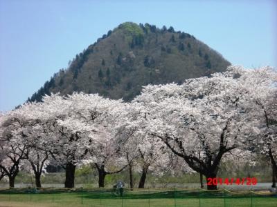 中川原桜6