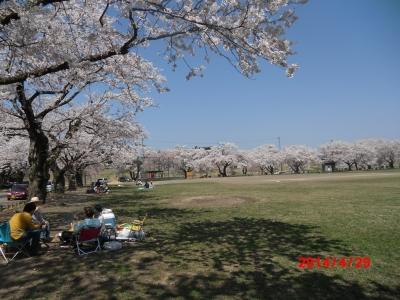 中川原桜8