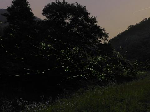 14-07-02-F05.jpg