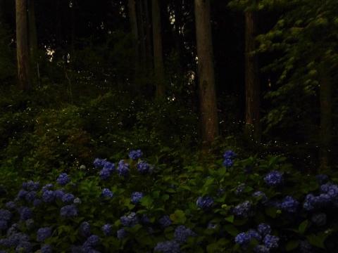 14-07-05-F05.jpg