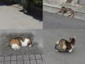 猫と目が合わぬ