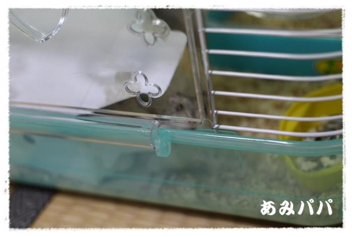 hamum (2)