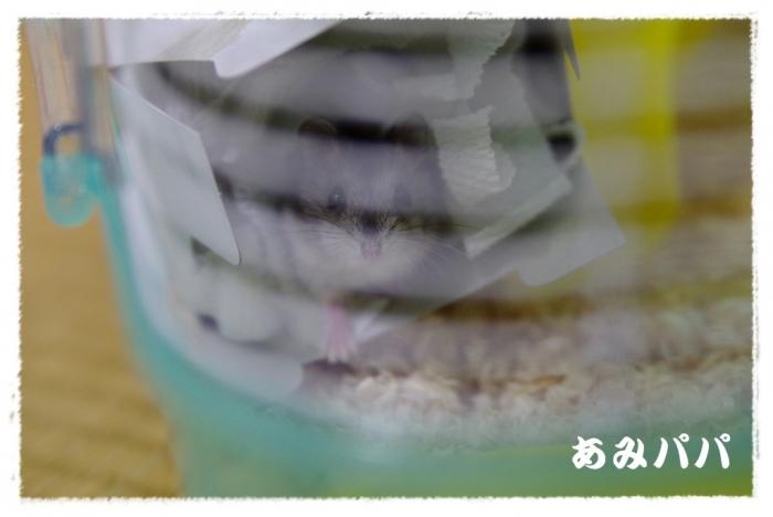 hamum (3)
