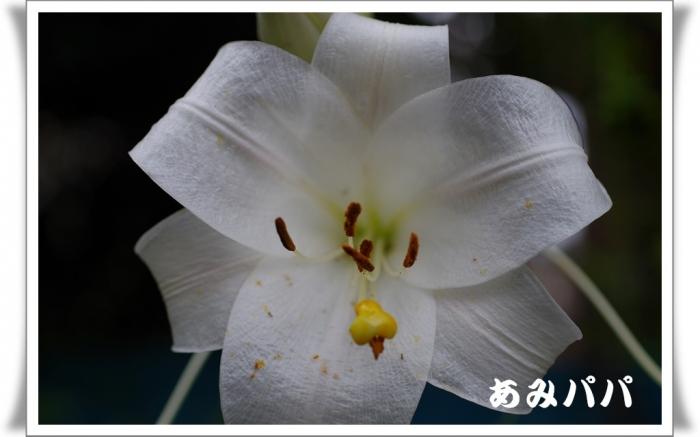 hanagaga (3)