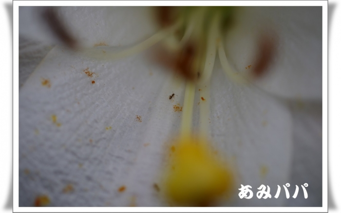 hanagaga (4)