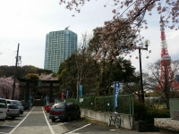 芝東照宮の桜