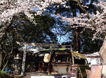 ぼっけ号と桜