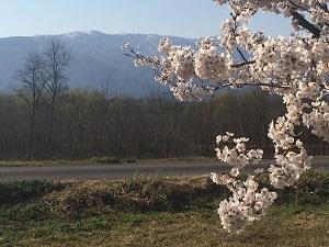 長井市から望む朝日連峰