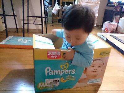 箱入り息子