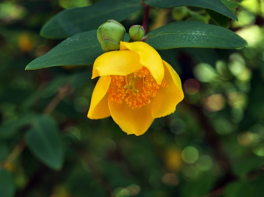 黄色い花20140615