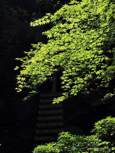 緑01-20140615