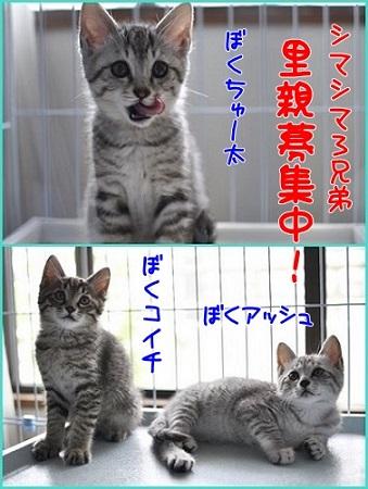 シマシマ兄弟