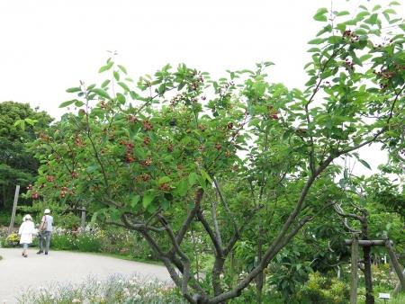 ガーデンパーク ジューンベリー