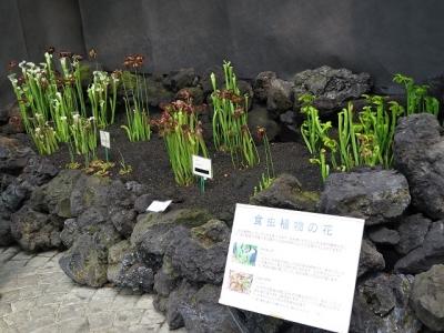 フラワーパーク 食虫植物