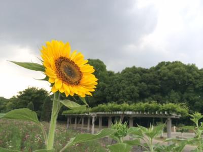 himawari20140828112456.jpeg