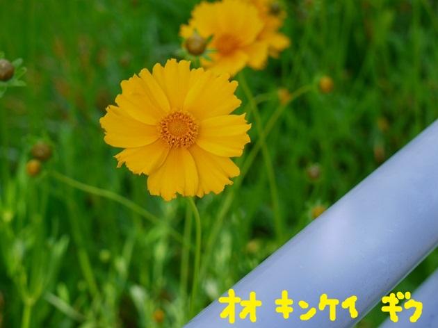 P1560006.jpg