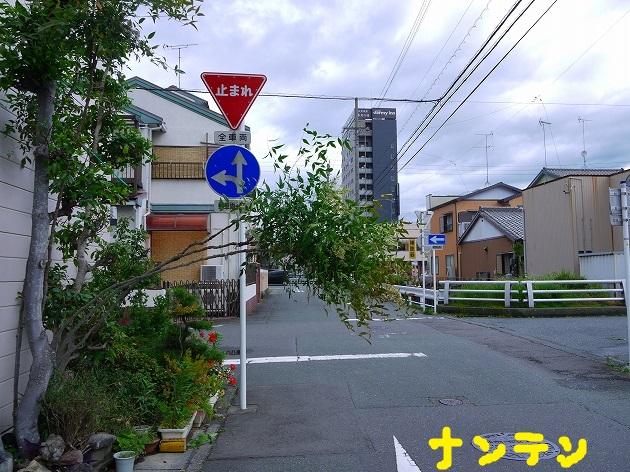 P1560233.jpg