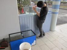 $ラボ日記-水槽掃除中
