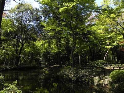平林寺・放生池