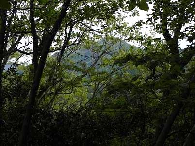 雑木林から見た蕨山