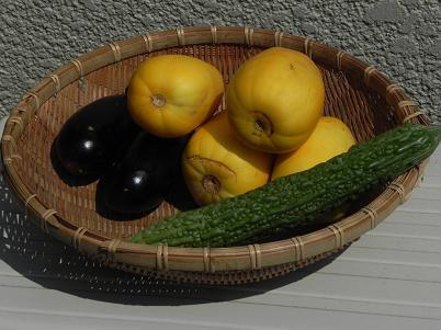 7月下旬の野菜の収穫