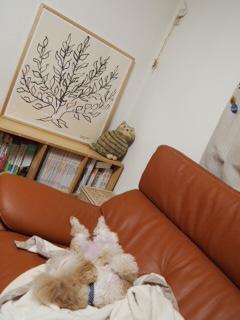 リビングのソファーの横に飾る。