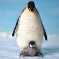 140613ペンギン親子