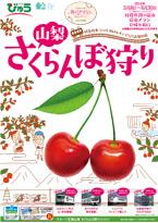 20140418_sakura_s.jpg
