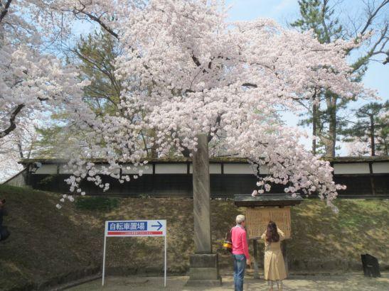 弘前さくらまつりに行ってきました。