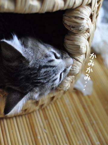 140708_koichi.jpg