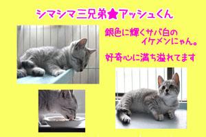 banner_keimama_ash.jpg