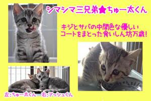 banner_keimama_chhta.jpg
