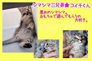 banner_keimama_koichi.jpg