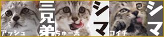 banner_yaraichoshimashima2.jpg