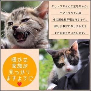 kuni_kijimikeboshu_banner.jpg