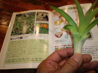山菜カンゾウ本